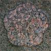 杉浦重剛の家紋